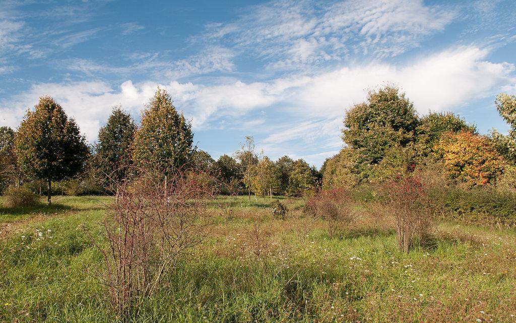Baum-des-Jahres-Wiese